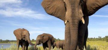 Botswana & Zimbabwe Luxury Mobile Camping