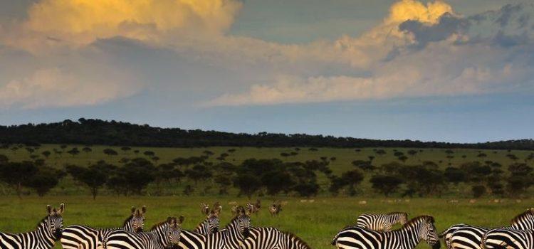 Serengeti Western Corridor