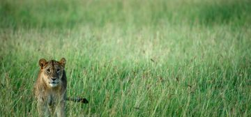 Singita Serengeti Grumeti