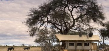 African Bush Camps Somalisa Expeditions