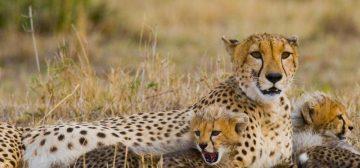 East Africa Luxury Photographic Safari – Perseid Meteor Shower