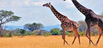 A Wild Tanzania Getaway